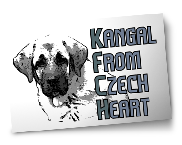 Kangal From Czech Heart